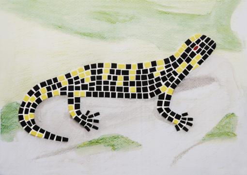 kit mosaico salamandra